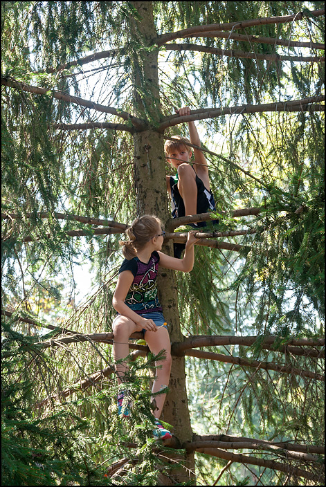 My sister Ava and my brother Brendan climbing a large pine tree.