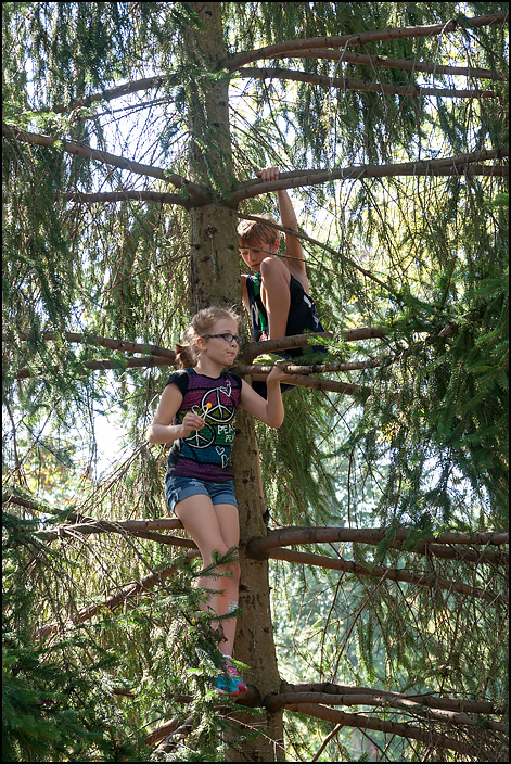 My sister Ava and my brother Brendan standing high up in a large pine tree.